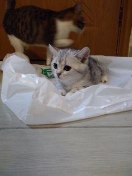 Tonks. Absurdly photogenic kitten